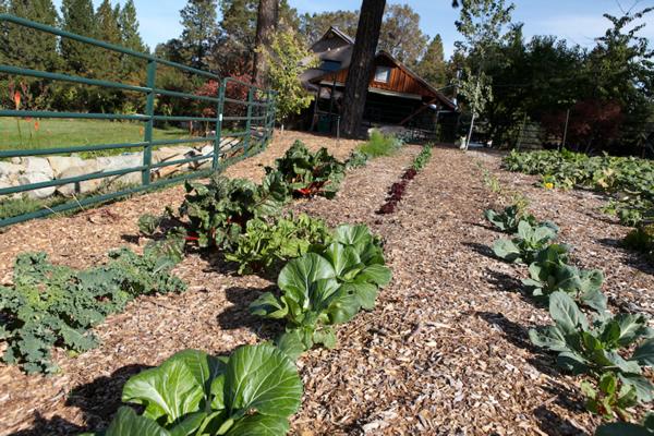 Jardinería alternativa