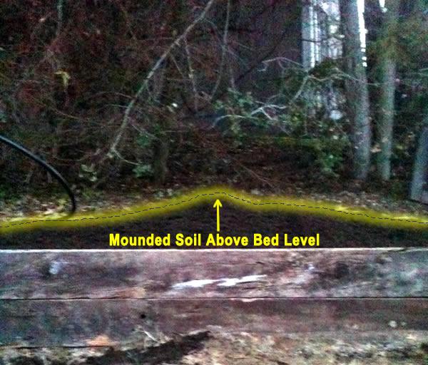 mounded soil above garden bed level