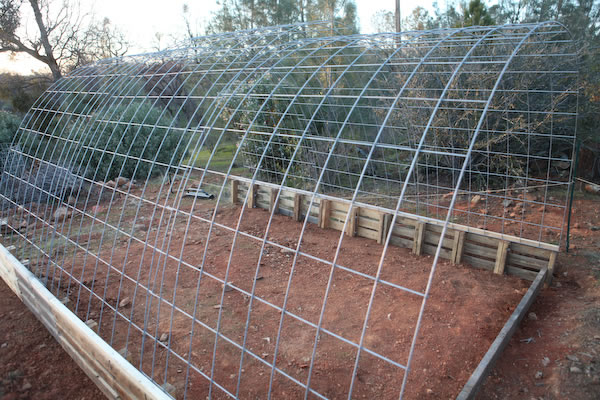 Building A Cattle Panel Pallet Greenhouse Peak Prosperity