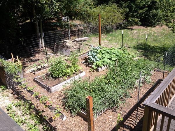 backyard garden with growing summer crops