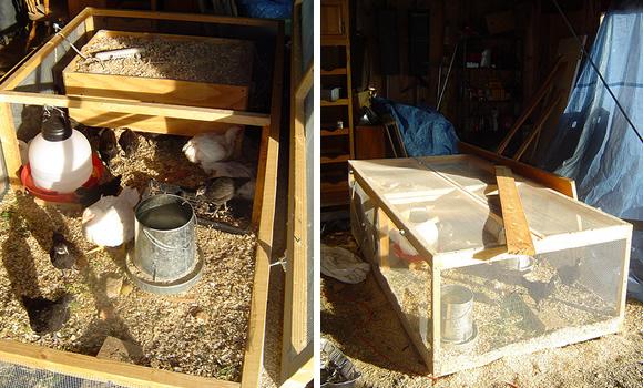 Raising And Harvesting Broiler Chickens Peak Prosperity