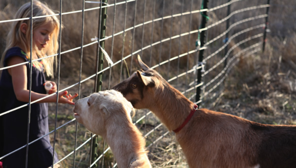 Image result for FENCE FOR CATTLE AND GOATS