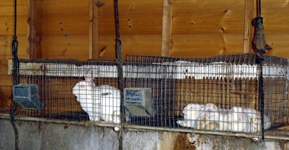 Resiliency With Rabbits Peak Prosperity